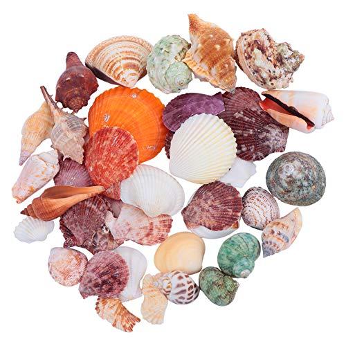 LEDMOMO 貝殻 アクアリウム 水槽 オブジェ 貝の殻 珊瑚 水槽 水族館の装飾 飾り