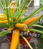 SANHOC Mix Zucchini Bonsai 30 pc Zucchino Estivo Sano Heirloom Biologica di Verdure Bonsai Pianta in Vaso per la casa Giardino: 1