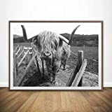 Blanco y Negro Freedom Highland Cow Animal Canvas Painting Posters Scandinavian Yak Wall Art Picture For Living Room 50x70 cm A-1406