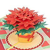 """Paper Love Poinsettia Christmas Flower Pop Up Card, Handmade 3D Popup Greeting Cards for Christmas, Holiday, Xmas Gift 