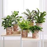 Pflanzen Set Test
