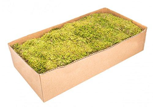 NaDeco Moos Platten Natur 1kg Plattenmoos Lappenmoos Kokedama Moos Deko Moos Bastel Moos Natur Moos Getrocknetes Moos