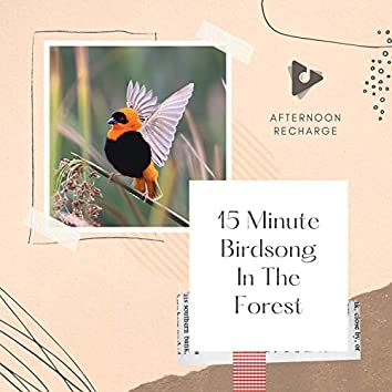 15 Minute Birdsong In The Forest