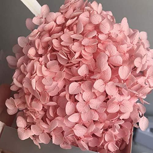 YFA 3 g/Lote Flores preservadas Frescas Naturales Cabeza de Flor de Hortensia Seca para Bricolaje Flores de Vida eterna Real MaterialRosa Claro