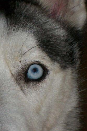 Siberian Husky Notebook