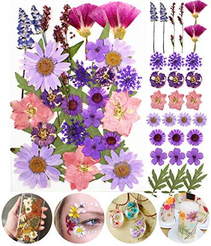 Longwu Flores Secas Naturales Prensadas Reales múltiples mezcladas Colores Surtidos para joyería de Resina DIY Bricolaje Decoraciones Florales para uñas colección Regalo Scrapbooking Arte Manualidades