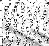Französische Bulldogge, Schwarz Und Weiß, Hund, Hunde,