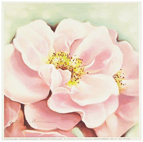 Eurographics AWA1121 wysokiej jakości druk artystyczny, Arkadiusz Warminski, dziki róż róż 18 x 18 cm