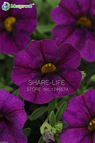 Graines 100PCS Violet Playmates Petunia Garden Home Bonsai Balcon Fleur Petunia Fleur