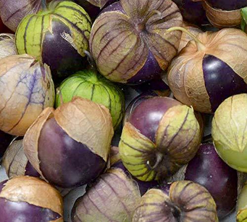 Tomatillo Purple - Physalis ixocarpa - 100 Samen