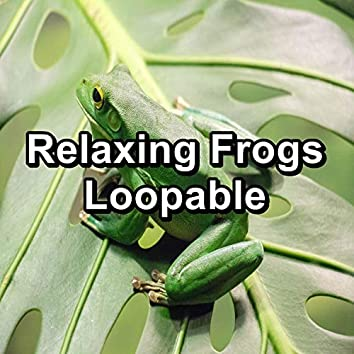 Relaxing Frogs Loopable