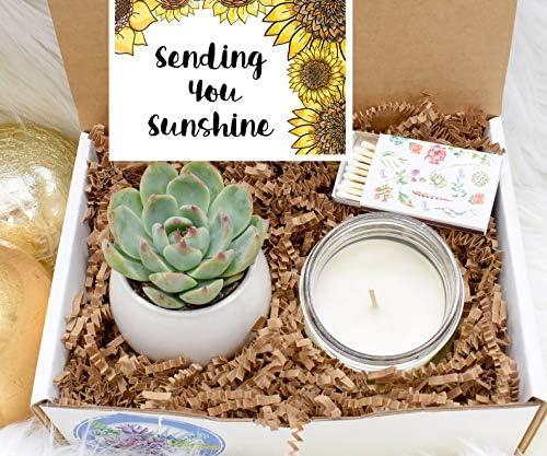 Sending You Sunshine Succulent Gift Box Live Succulent Gift Friendship Gift Thinking of You product image