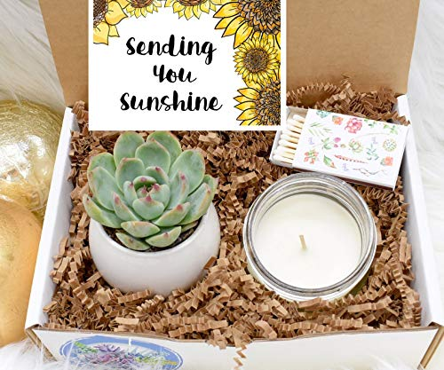Sending You Sunshine Succulent Gift Box - Live Succulent Gift - Friendship Gift - Thinking of You Gift - Send a Gift - Care Package (XBM2)