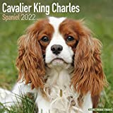Cavalier King Charles Spaniel 2022- 16-Monatskalender: Original Avonside-Kalender [Mehrsprachig] [Kalender]: Original BrownTrout-Kalender, mit freier DogDays-App (Wall-Kalender)