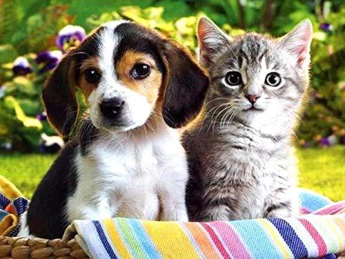 Knutselset voor katten en honden, schattig, diamant schilderwerk, kruissteek, strass-borduurwerk, voor thuis, 5D diamond painting kit Foret rond 20x25CM / 7.9x9.8 IN C02