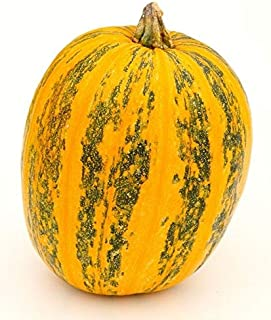 HOT - 10 Seeds Non-GMO Rare Lady Godiva Pumpkin Seeds - Hull-Less Seeds - New