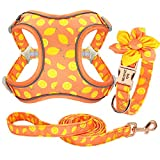 Forestpaw Multi-Colored Dog Harness and Leash Set,Step in Reflective Vest Harness, Personalized for Small,Medium,Large,French Bulldog,Labrador,Beagles,Samoyed,LemonYellow,S