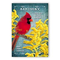 KENTUCKY BIRD AND FLOWER postcard set of 20 identical postcards. KY state symbols post cards. Made in USA. [並行輸入品]