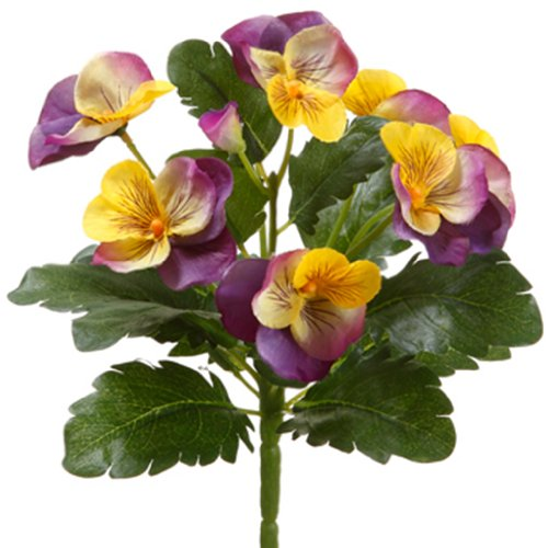 8' Pansy Bush Lavender Yellow (Pack of 12)