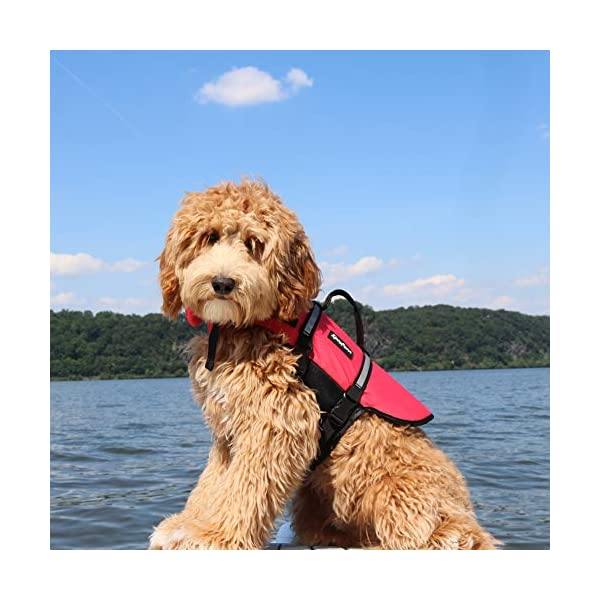 Zippy Paws Life Jacket Dog, Red, Small Click on image for further info. 2