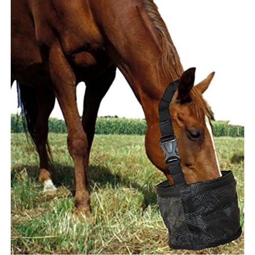 Horse Grain: Amazon com