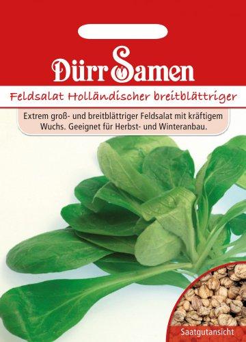 Salatsamen - Feldsalat Holländischer breitblättriger von Dürr-Samen