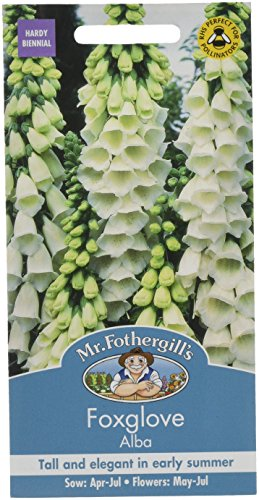 Mr Fothergills Pilzsporen, Blume Fingerhut Alba 1000 Samen
