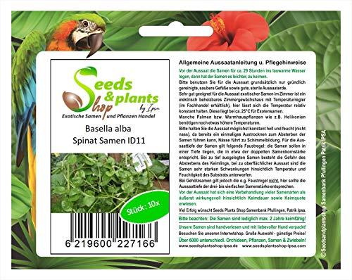 Stk - 10x Basella alba Spinat Gemüse Garten Pflanzen - Samen ID11 - Seeds Plants Shop Samenbank Pfullingen Patrik Ipsa