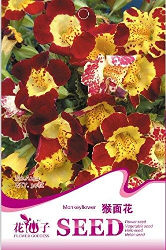 (Mix minimum 5) 1 emballage d'origine 30 pcs Pots de fleurs aux planteurs de belles orchidées visage de singe graines expédition A234 gratuit