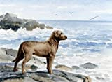 Chesapeake Bay Retriever Dog Art Print Signed by Artist DJ Rogers
