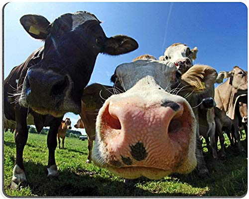 Mauspad Naturkautschuk Mousepad Eine Herde hübscher Kühe in Bayern
