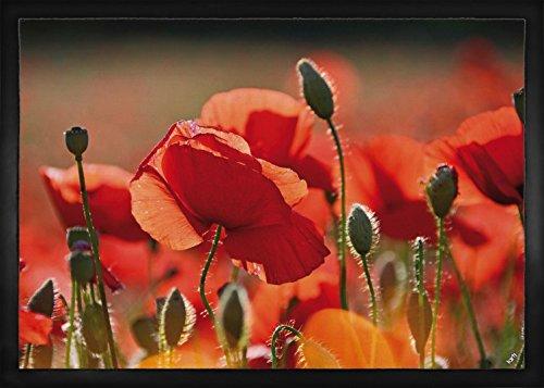 1art1 Coquelicots Paillasson Essuie-Pieds - Coquelicots Rouges, Fleurs Et Boutons (70 x 50 cm)