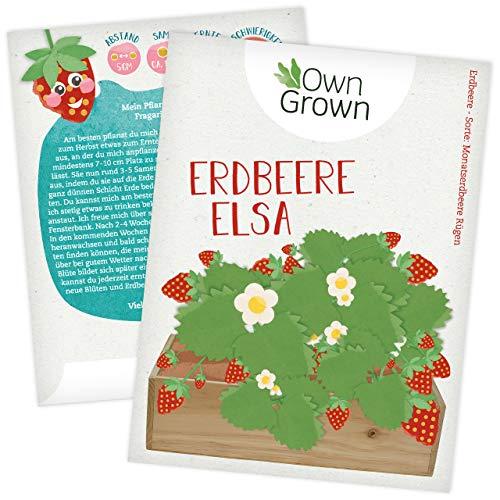Erdbeer Samen von OwnGrown : Erdbeeren pflanzen für Kinder und Erwachsene mit Erdbeersamen für Garten und Balkon, Premium Saatgut mit Anleitung, Erdbeeren Samen der köstlichen Sorte Fragaria Vesca