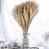 RENNICOCO 100 Stücke Künstliche Blume Künstliche Pflanze Große Weizen Getrocknete Blumen Gartenpflanzen Natürliche Primärfarben Echten Weizen für Hochzeitsdekorationen - 3