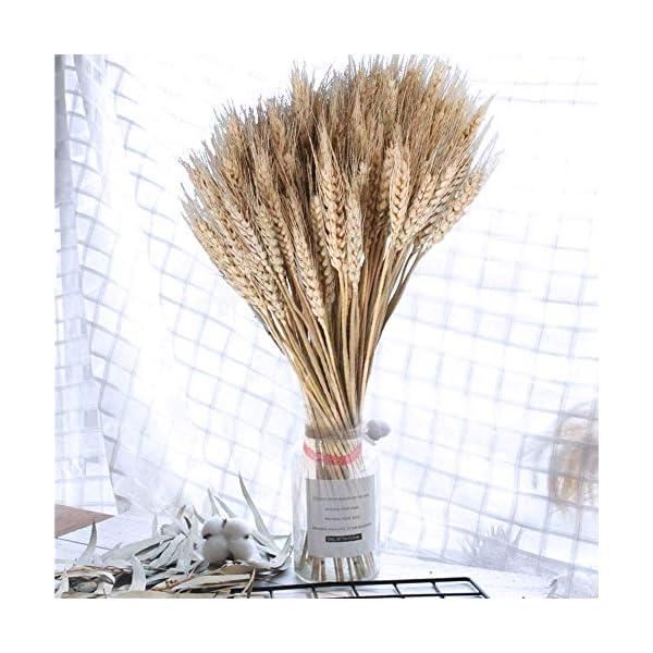 OPSLEA Flores secas de trigo Oreja DIY Simulación Ramos Rural Village 100 Wedding Party Decoración del hogar