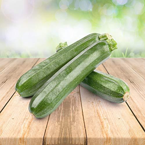 Zucchini 25 x Samen - Aus Portugal 100% Natürlich Ohne Chemische Anzuchthilfe Oder Gentechnik, Einfach Nur Natur Pur