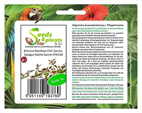 Stk - 5x Bolivian Rainbow Chili Samen Saatgut Küche Garten PW150 - Seeds Plants Shop Samenbank Pfullingen Patrik Ipsa
