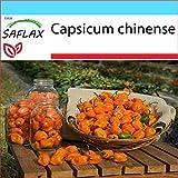 SAFLAX - Set regalo - Chile habanero amarillo - 10 semillas - Con caja regalo/envío, etiqueta para envío, tarjeta de felicitación y sustrato de cultivo y fertilizante - Capsicum chinense