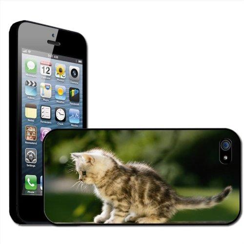 Fancy A Snuggle 'pluizig katje op bank' beschermhoes voor Apple iPhone 5, harde schaal, opsteekbaar