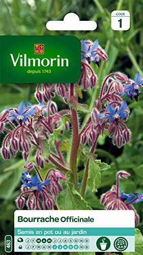 Vilmorin 5873545 Bourrache officinale, Violet, 90 x 2 x 140 cm