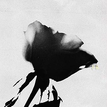 Розы, восход