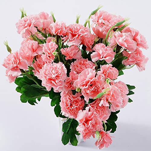 Beferr Artificial Carnation Dark Pink Silk Petals Fake Flowers Forever Plants for Gifts Home Party Wedding Office Garden Art Decoration 4PCS
