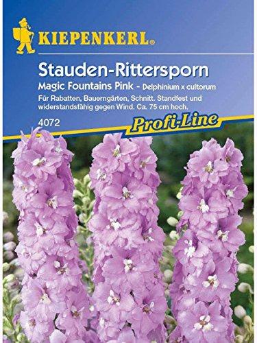 Delphinium x cultorum Rittersporn Magic Fountains Pink rosa