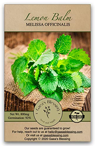 Gaea's Blessing Seeds - Lemon Balm Seeds (1000 Seeds) Net Wt. 800mg Non-GMO Seeds with Easy to Follow Planting Instructions - 92% Germination Rate Melissa Officinalis
