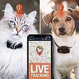 Zoom IMG-1 paj gps pet finder tracker