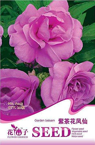 semences 100pcs Hortensia, Hydrangea macrophylla graines de plantes à fleurs, 6NGREA