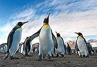クロス ステッチ DIY 手作り刺繍キット 正確な図柄印刷クロスステッチ 家庭刺繍装飾品 青い空の下のペンギン 40X50CM