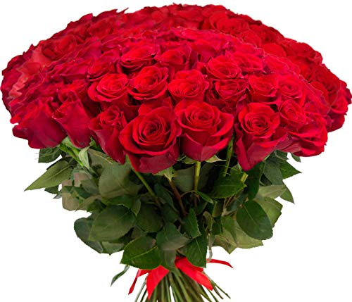 Red Roses Bouquet Fresh Cut Flowers Long Stem Large Pedals, no Vase ( Bunch of 15 )
