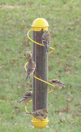 Bird Quest SBF3G 17 Inch Spiral Seed Bird Feeder