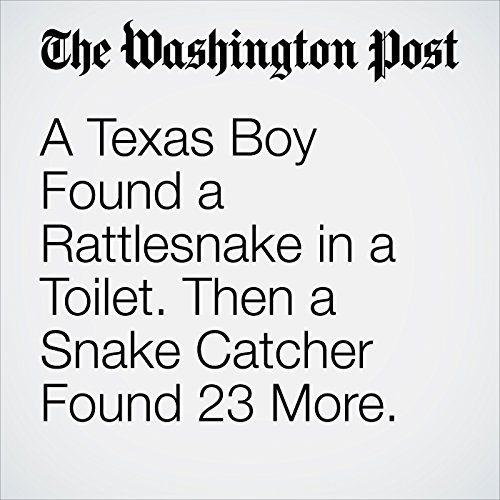 A Texas Boy Found a Rattlesnake in a Toilet. Then a Snake Catcher Found 23 More. copertina